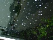 Hochwasser-07_010
